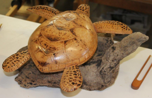 turtle300